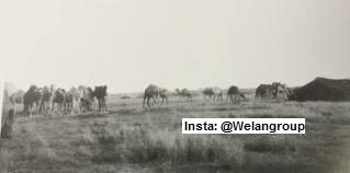 مضارب أمير الخرصة من عنزه الشيخ سليمان بن قعيشيش1899م